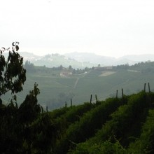 Barbaresco Vineyard