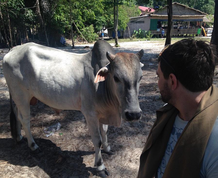 Koh Ta Kiev Cow