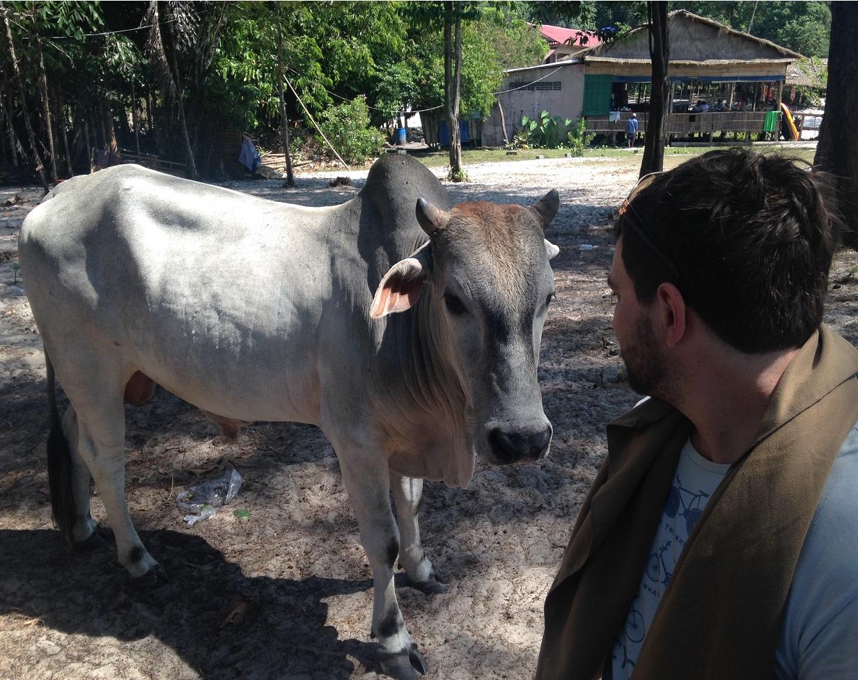 Sihanoukville Cow
