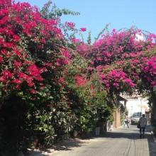 Tel Aviv Flowers